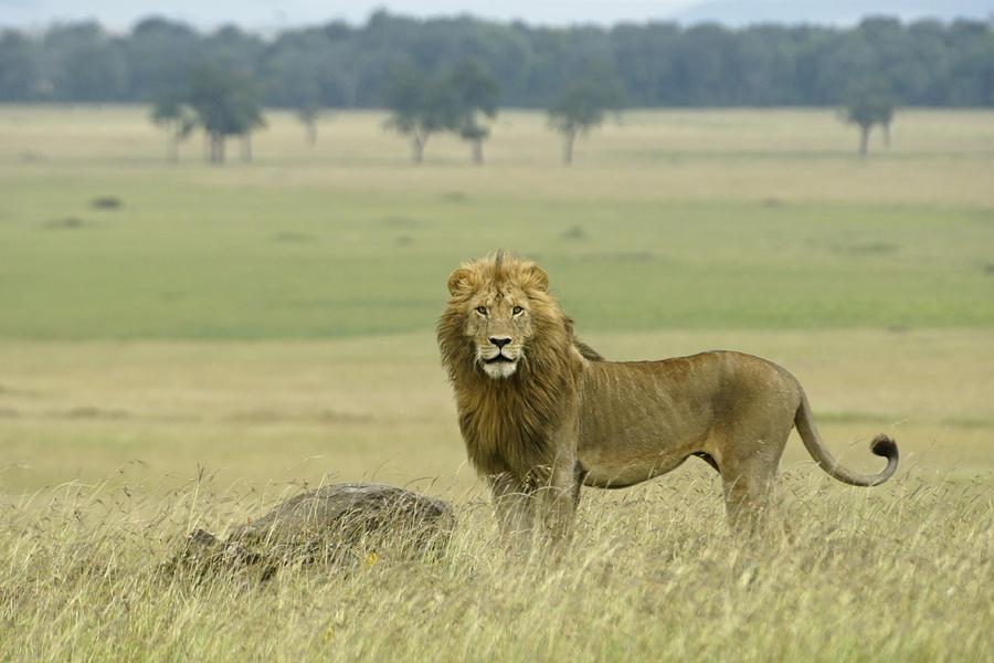 Africa Photograph - Surveying His Kingdom by Michele Burgess