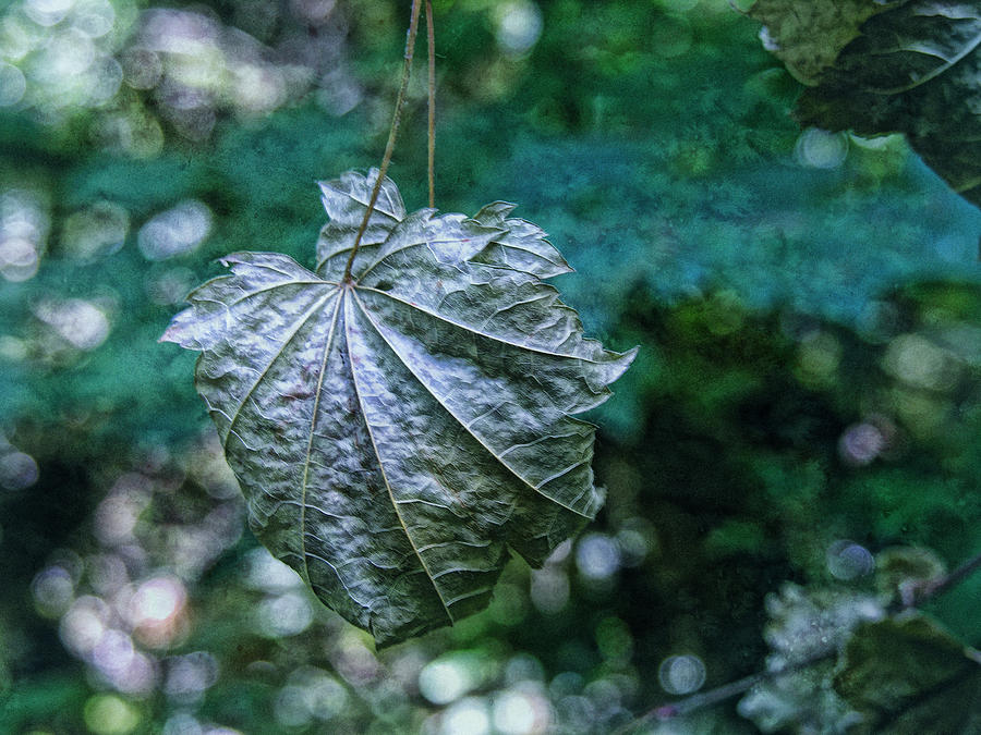 Bokeh Photograph - Suspended by Bonnie Bruno
