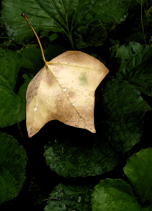 Nature Photograph - Suspended Leaf by Glenn Donze