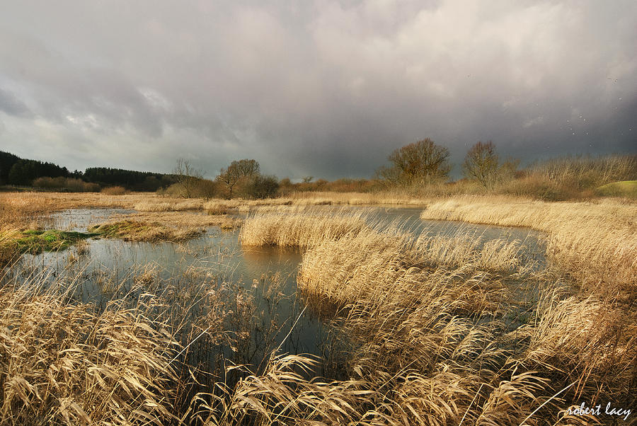 Swampland Photograph - Swampland by Robert Lacy