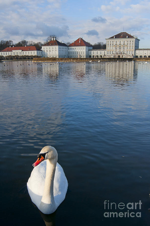 Europe Photograph - Swan At The Palace by Andrew  Michael