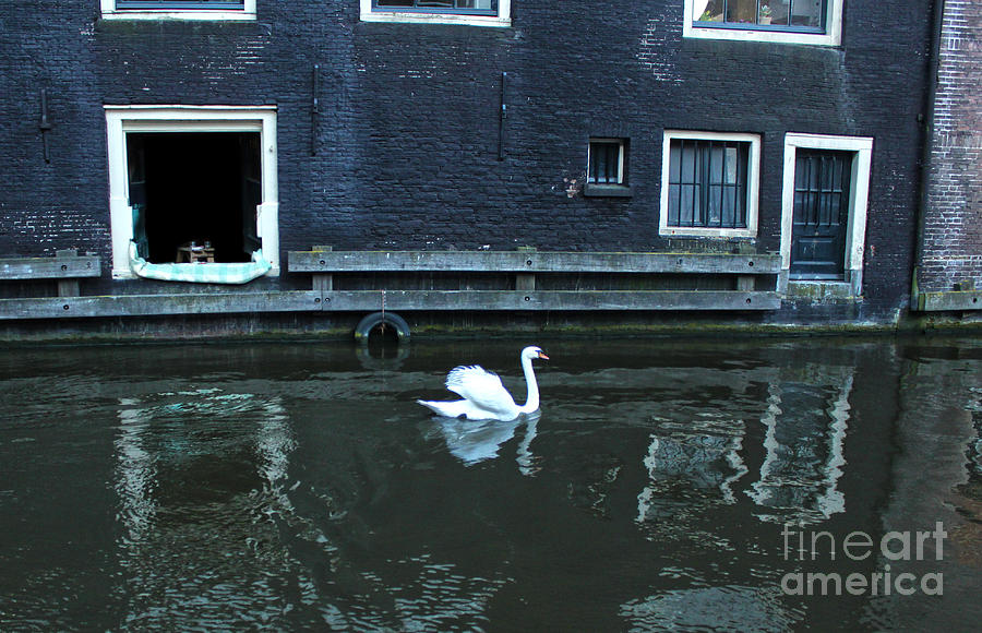 Swan Photograph - Swan In Amsterdam Canal by Gregory Dyer