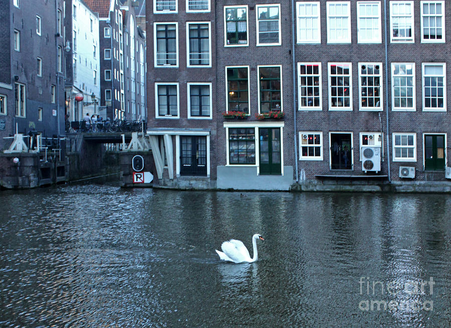 Swan Photograph - Swan In Amsterdam by Gregory Dyer