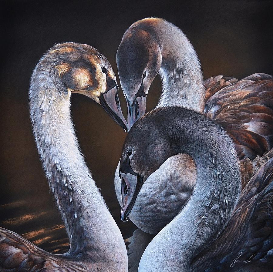 Birds Drawing - Swan Whispers by Elena Kolotusha