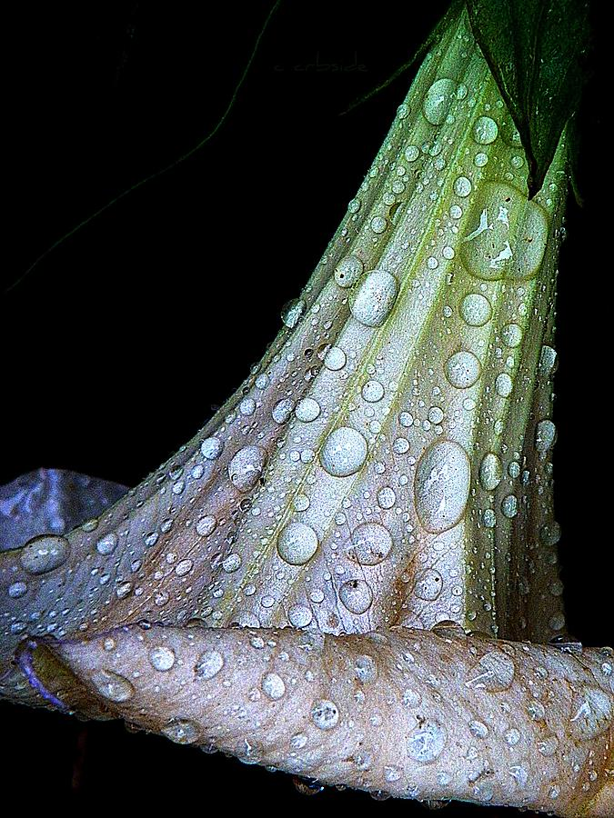 Nature Photograph - Sweet And Rainy by Chris Berry