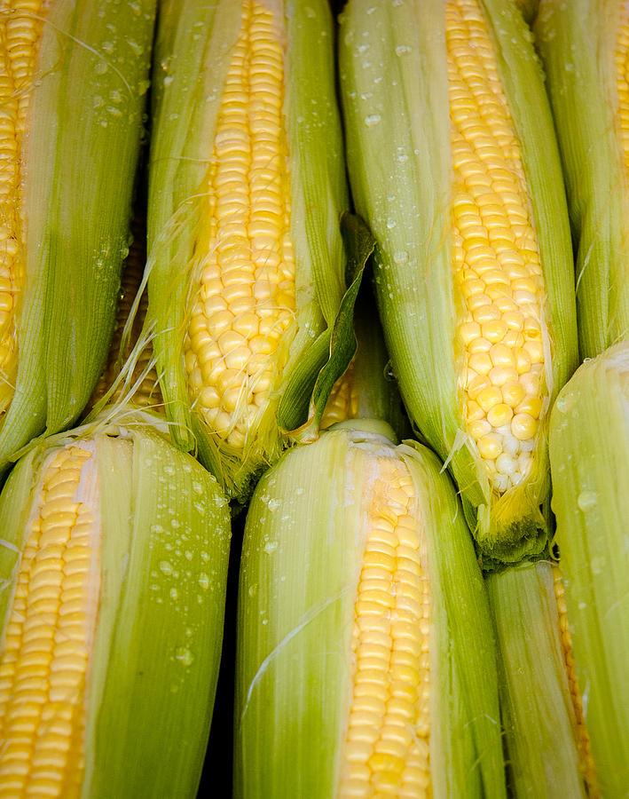 Corn Photograph - Sweet Corn by Jen Morrison
