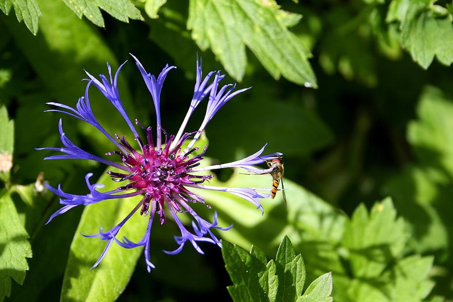 Sweet Nectar by Harri Spietz