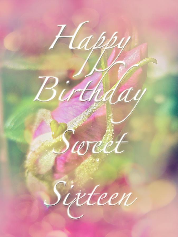 Sweet Sixteen Birthday Greeting Card Rosebud Photograph