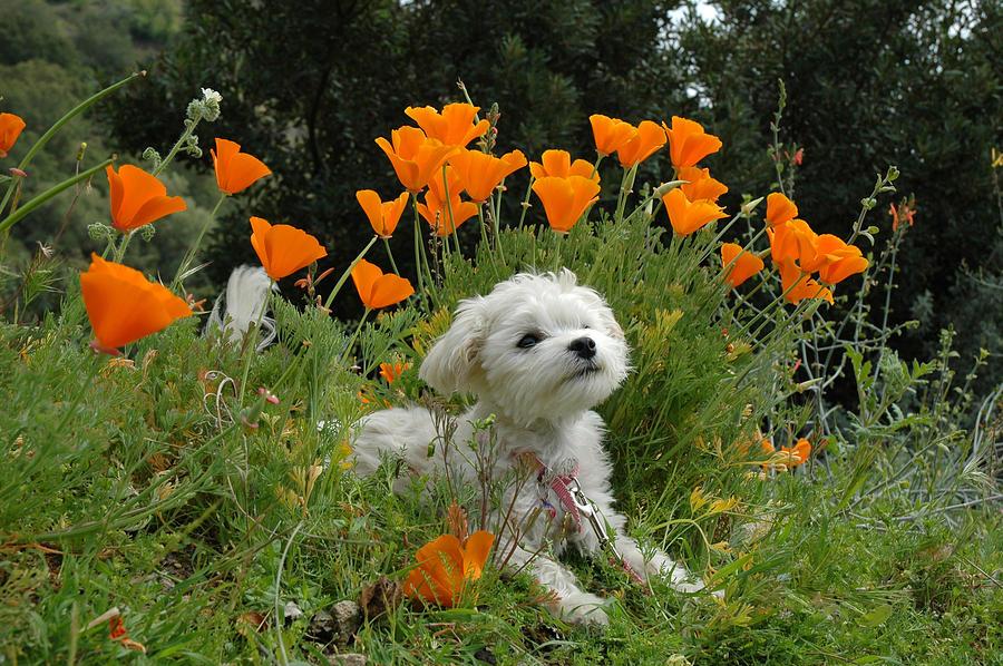 Puppy Photograph - Sweet Sunshine by Lynn Bauer