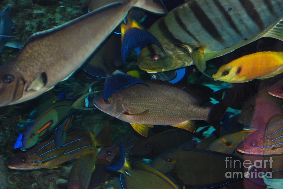 Aquarium Of The Pacific Photograph - Swimming Fish by Andrea Simon