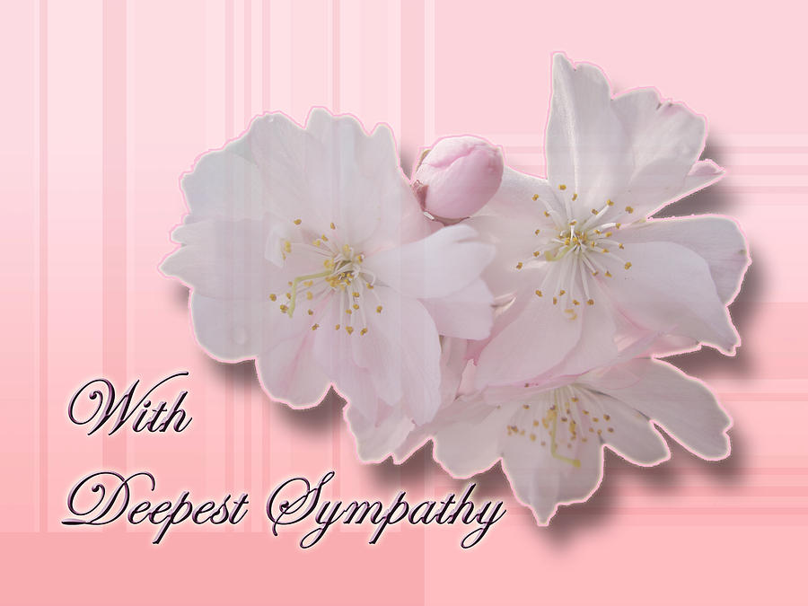 Sympathy Photograph - Sympathy - Cherry Blossoms by Mother Nature