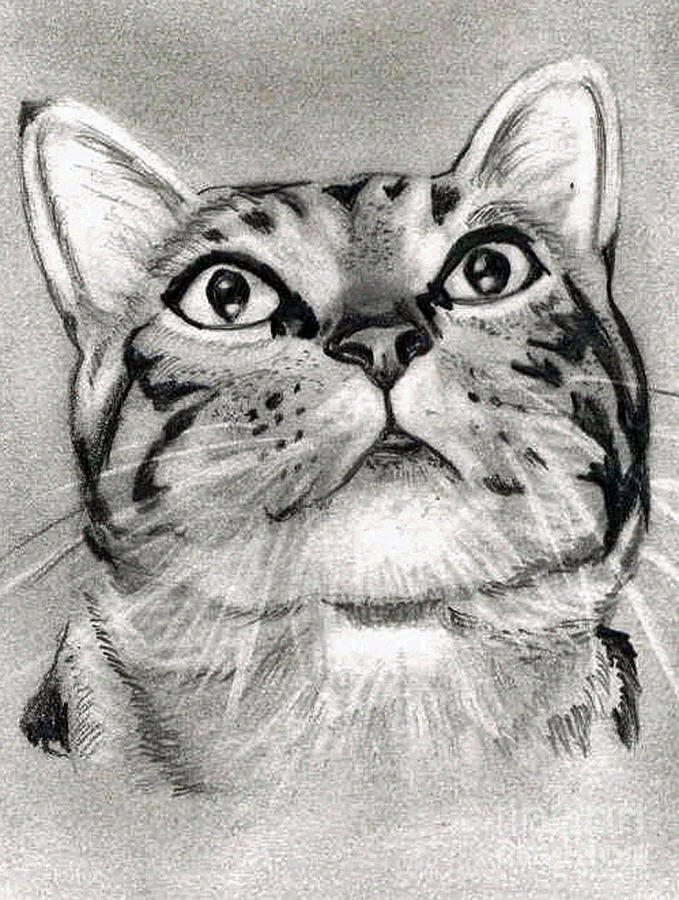 Cat drawing tabby cat pencil drawing by claudiu radulescu
