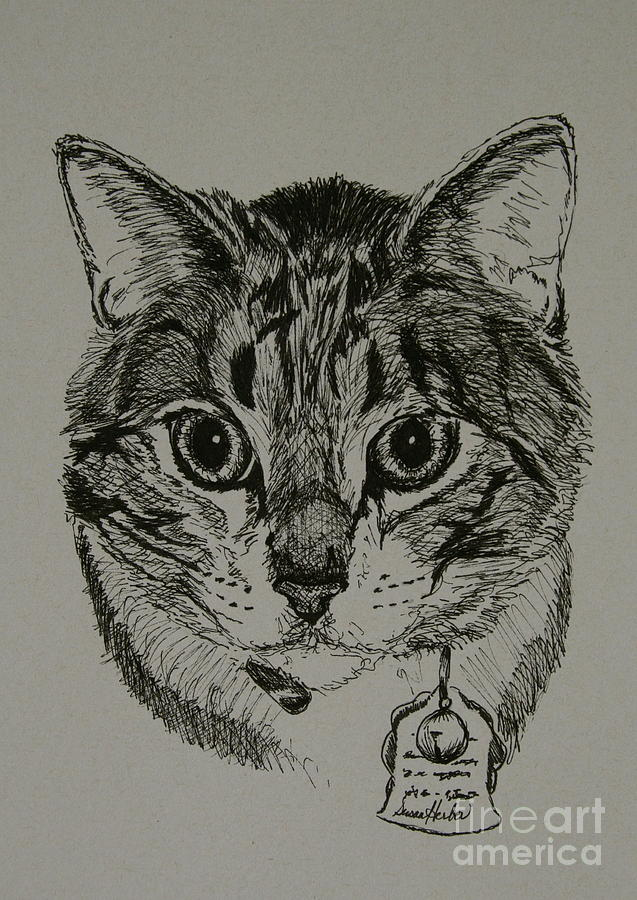 Tabby Cat Drawing - Tabby by Susan Herber