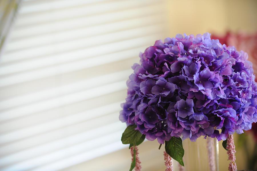 Flower Photograph - Tabletop Bloom by Brandon McNabb