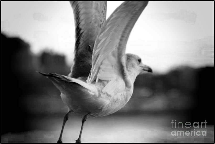 Bird Mixed Media - Take Off by Jenn Bodro