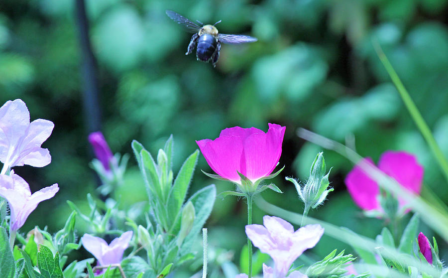 Becky Photograph - Takeoff by Becky Lodes