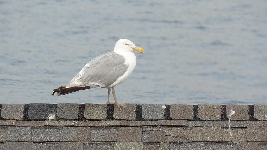 Seagull Photograph - Taking in the View by Jessica Cruz