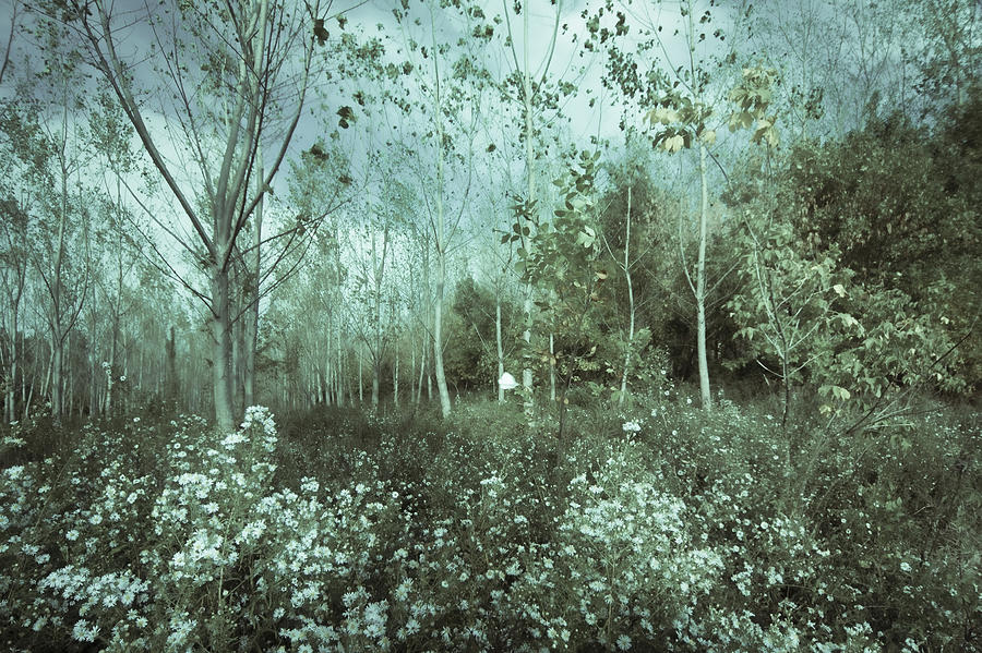 Tale Of The Seasons Photograph by Akos Kozari