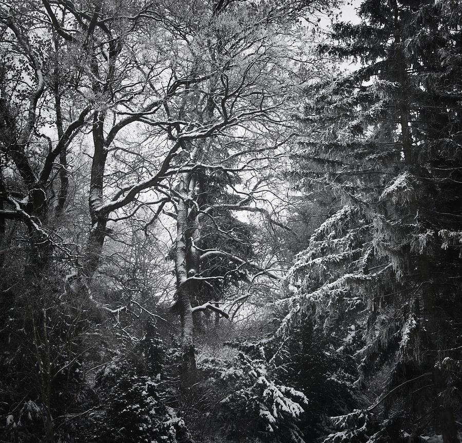 Tree Photograph - Tale Of The Trees by Akos Kozari