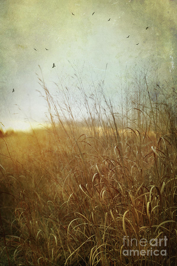 Autumn Photograph - Tall Grass Growing In Late Autumn by Sandra Cunningham