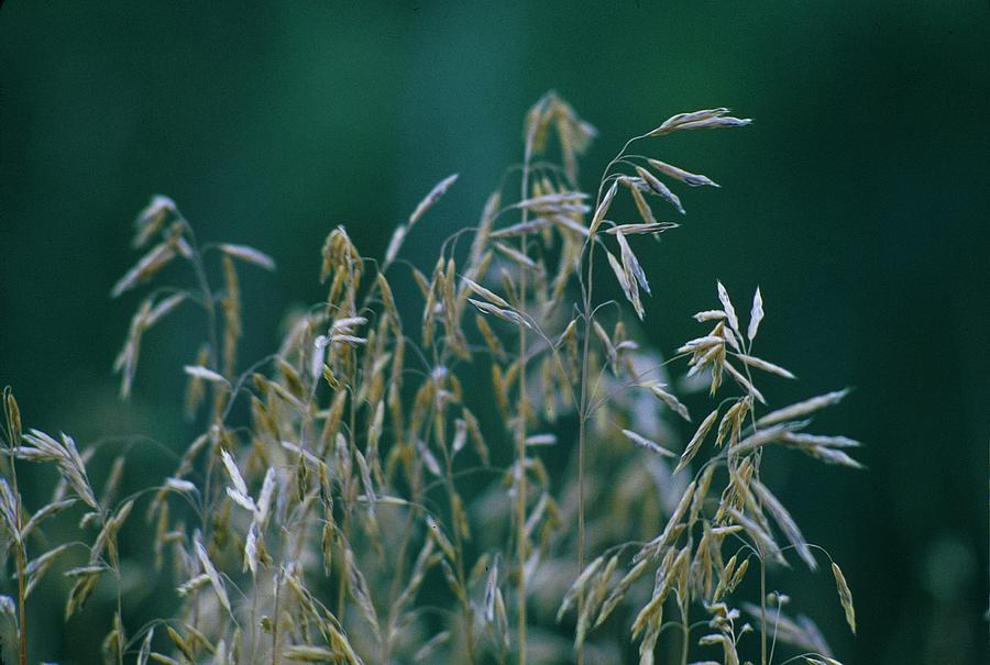 Landscape Photograph - Tall Grass Seeds by Jaye Crist