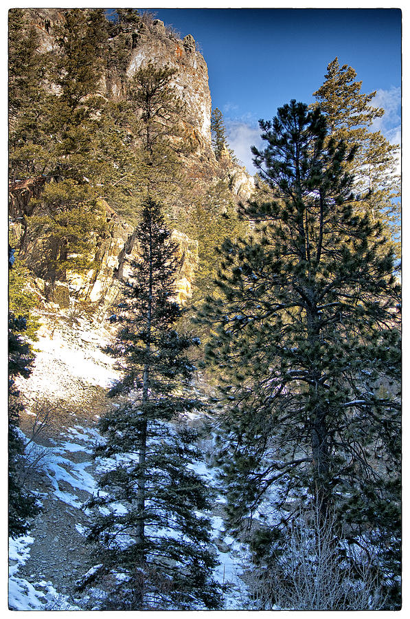 Mountain Photograph - Tall Trees by Lisa  Spencer