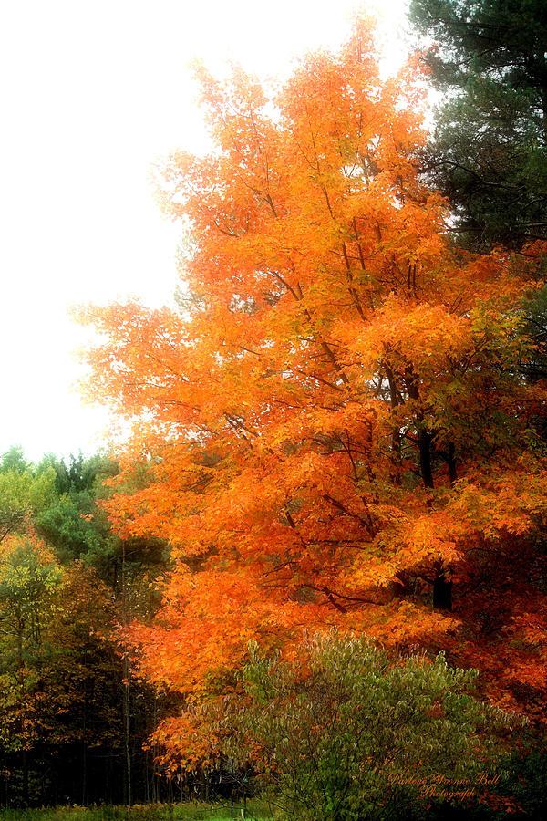 Tree Photograph - Tangerine Autumn  by Darlene Bell