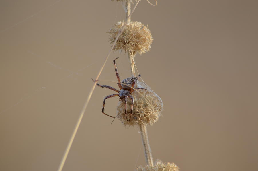 Spider Photograph - Tangled  by Melissa  Maderos