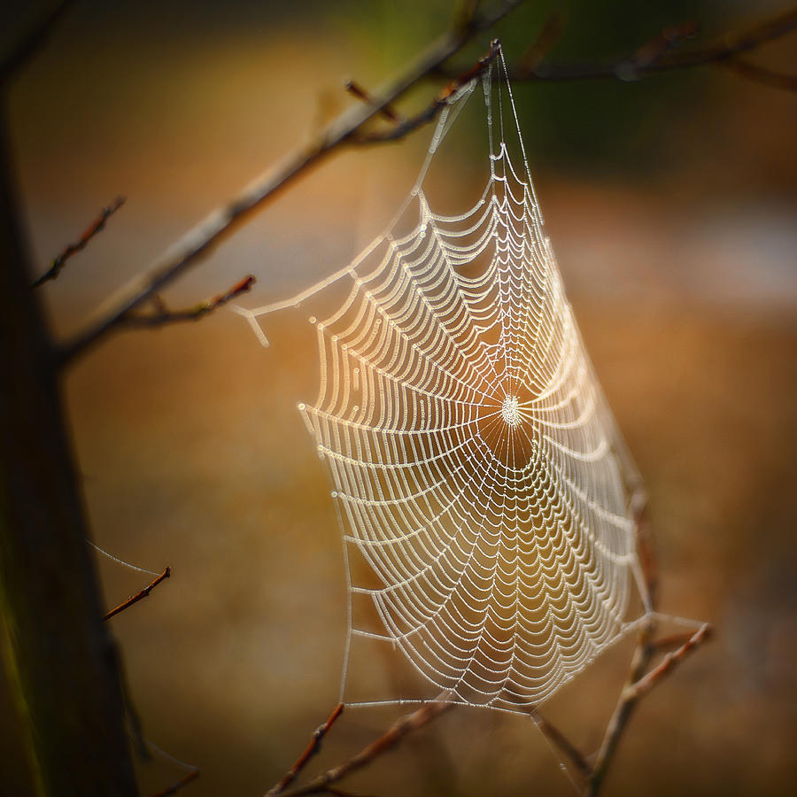 Spider Web Photograph - Tangled Web by Brenda Bryant