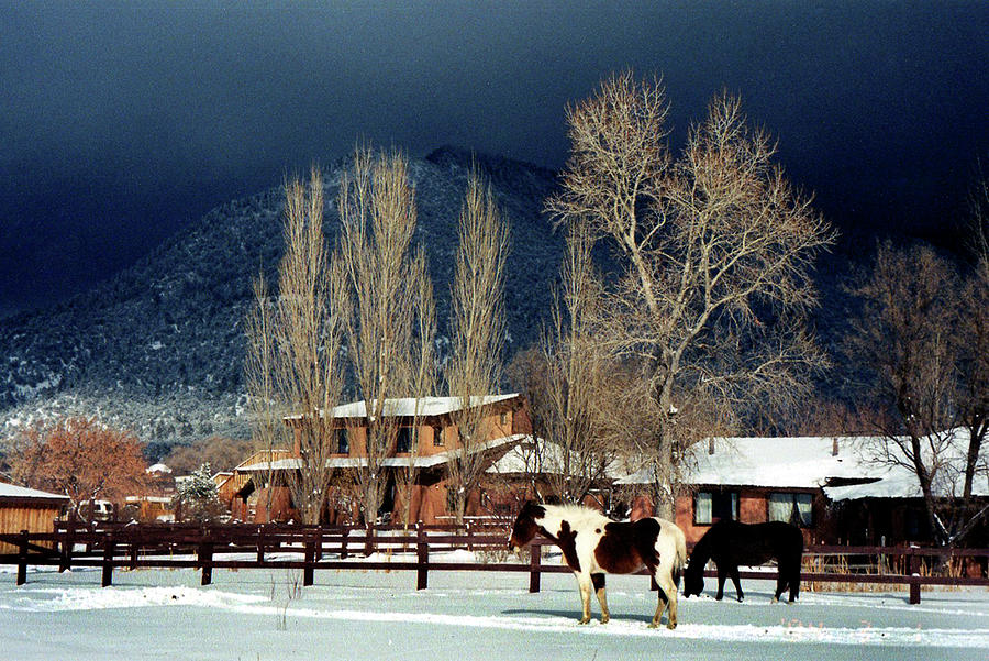 Horse Photograph - Taos Typical by Ed Golden