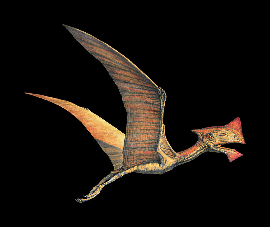Tapejara Photograph - Tapejara Pterosaur by Joe Tucciarone