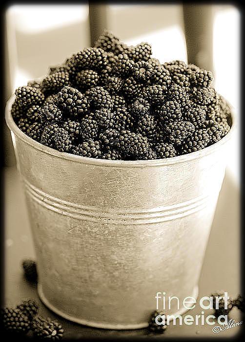 Black Photograph - Tastes Great On The Oatmeal  by Alana Ranney