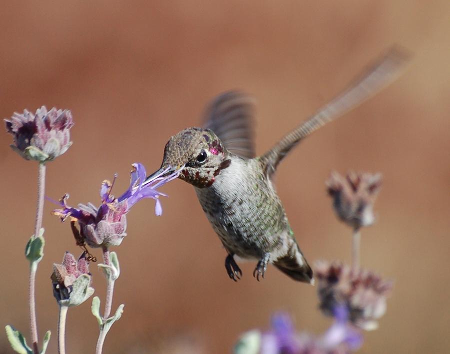 Hummingbirds Photograph - Tasty by Meeli Sonn