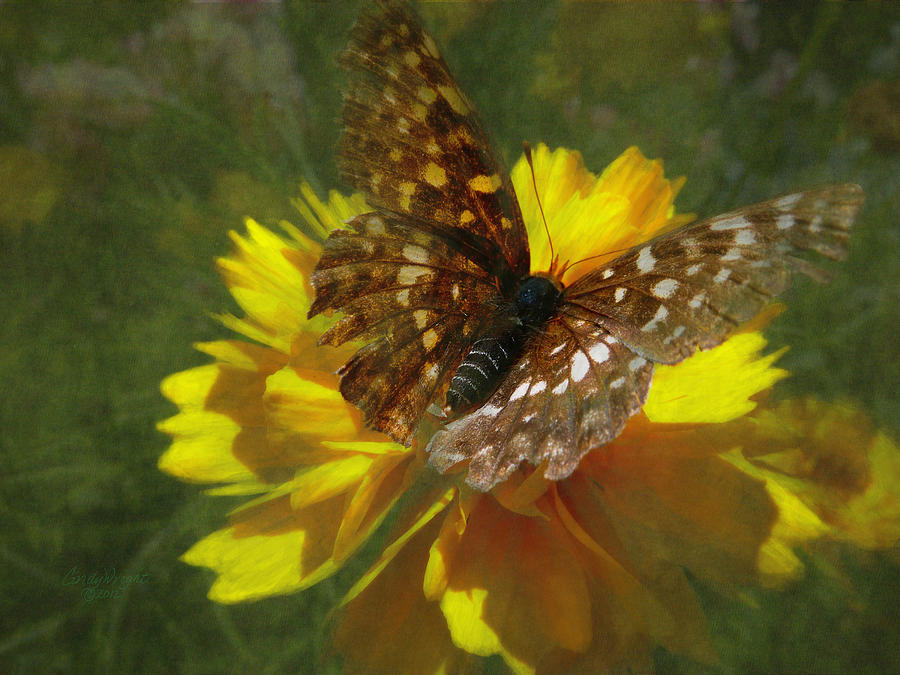 Cindy Photograph - Tattered Wings by Cindy Wright