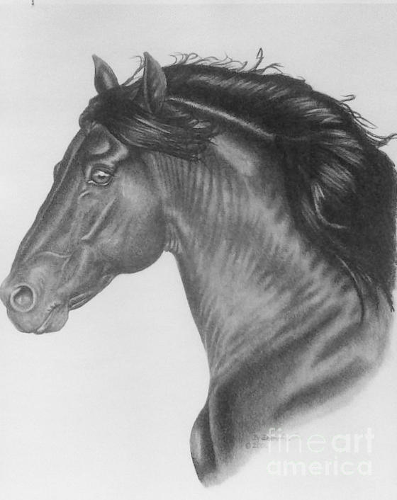 Stallion Drawing - Te Amo by Dave Alwin