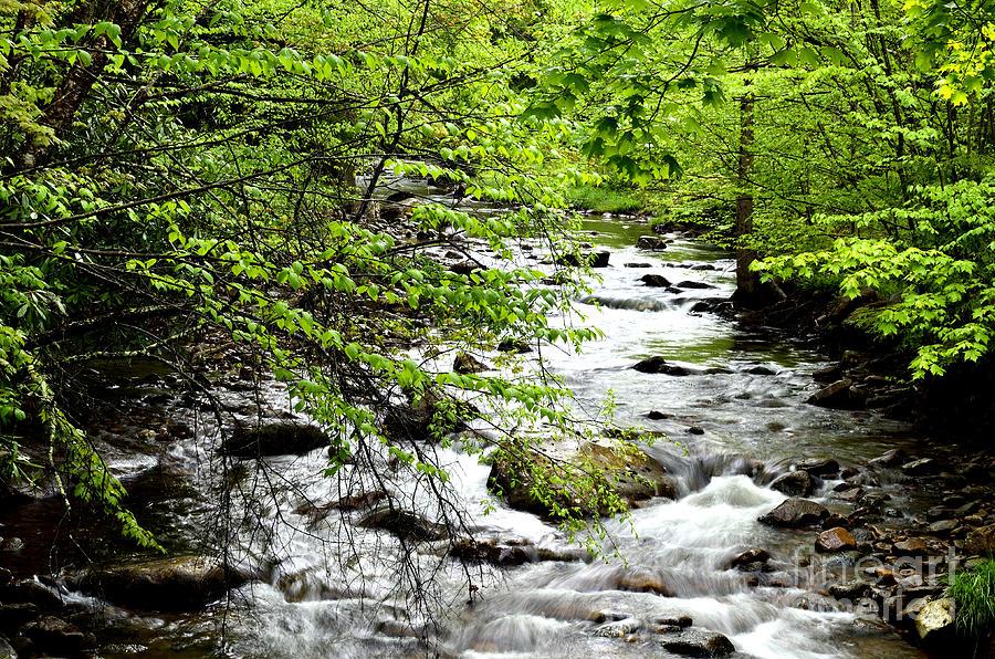 Usa Photograph - Tea Creek by Thomas R Fletcher