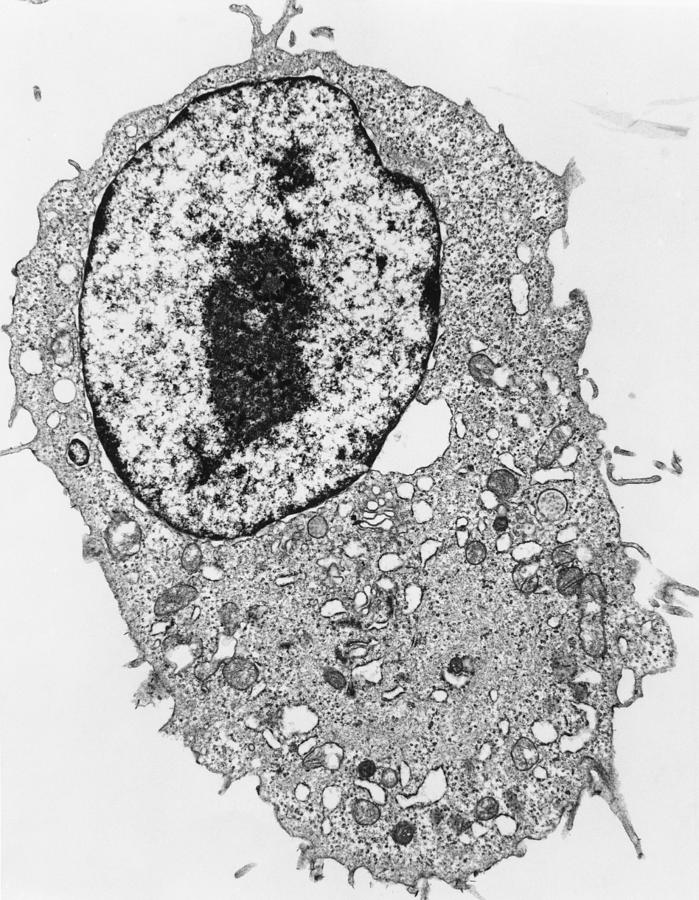 Tem Of Animal Cell Photograph by Dr Gopal Murti
