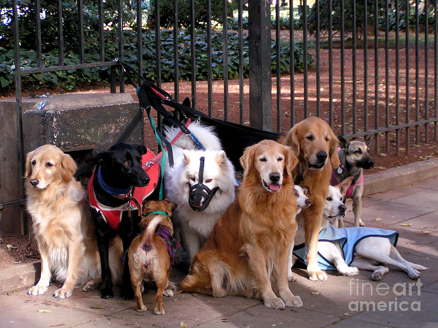 Active Photograph - Ten Alpha Dogs by Alexandra Jordankova