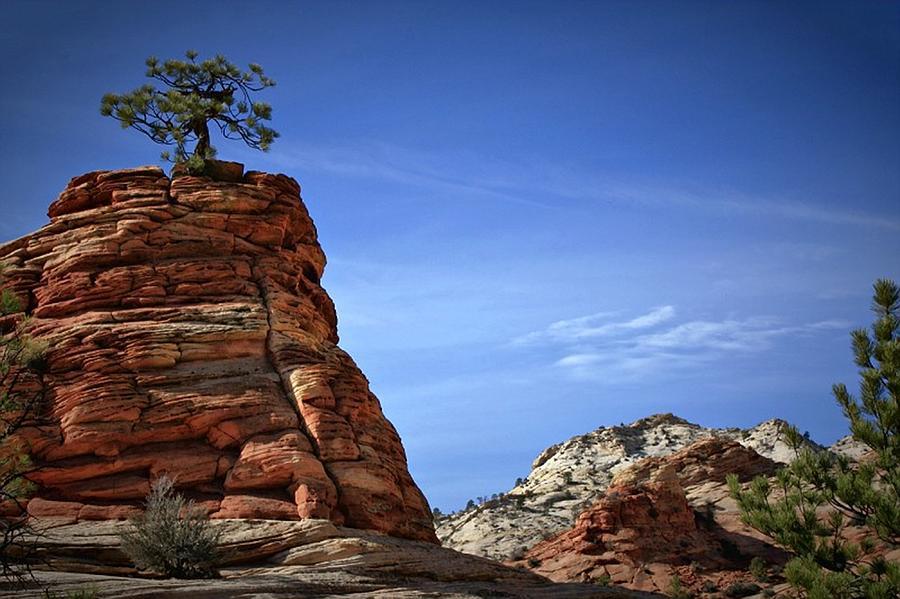 Tree Photograph - Tenacity by Christine Annas