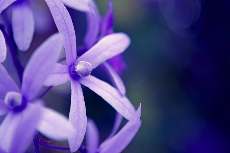 Flower Photograph - Tender Petals by Melanie Moraga