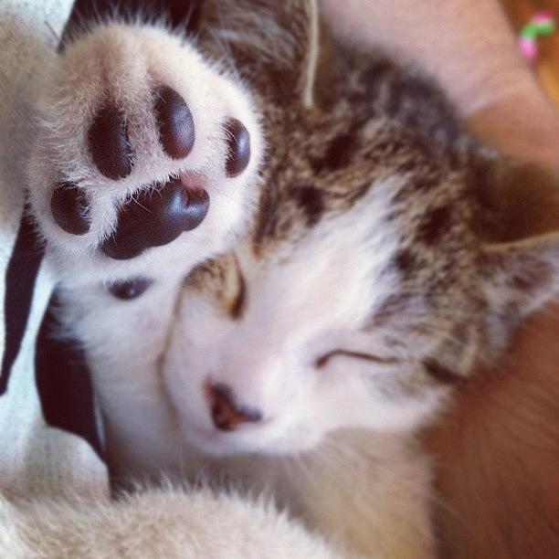 Kitty Photograph - Tengo Un Gato Que No Hace Más Que by Elisabet Dominguez