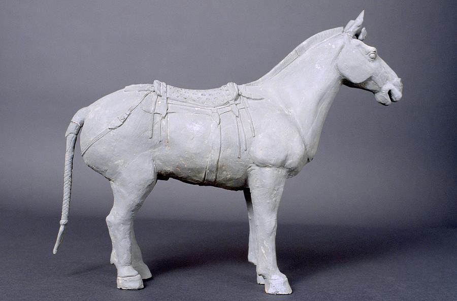 Terracotta Warrior's Horse Photograph by Shaun Higson  Terracotta Warr...