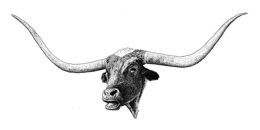 texas longhorn drawing by scott woyak