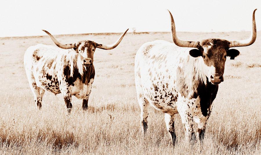 Longhorn Photograph - Texas Pair by Elizabeth Hart
