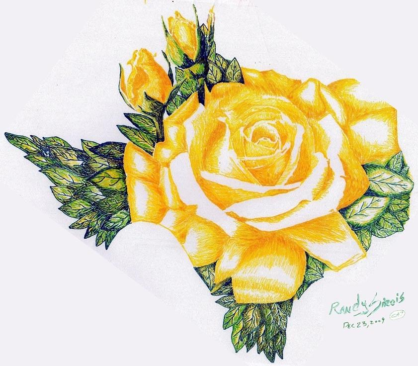 Texas yellow rose drawing by randy sirois mightylinksfo