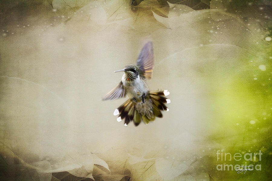 Hummingbird Photograph - Textured Angel by Cris Hayes
