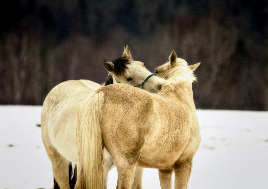 Horse Photograph - That Loving Moment by Gary Smith