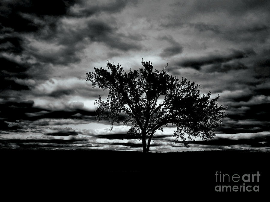Tree Photograph - That Tree by Lin Haring