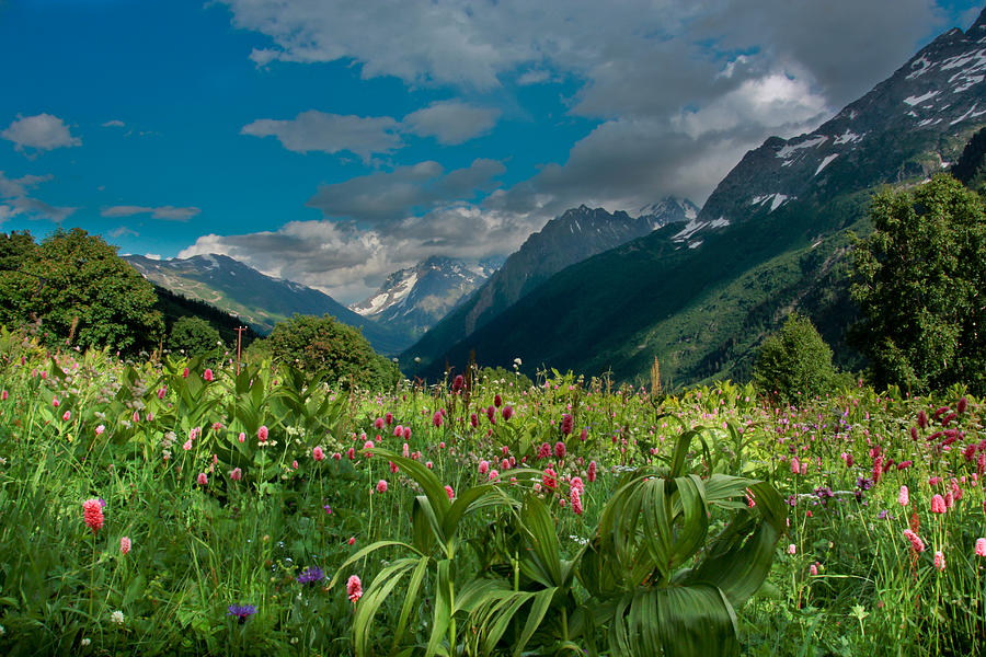 Landscape Photograph - The Alpine Meadows by Olga Vlasenko