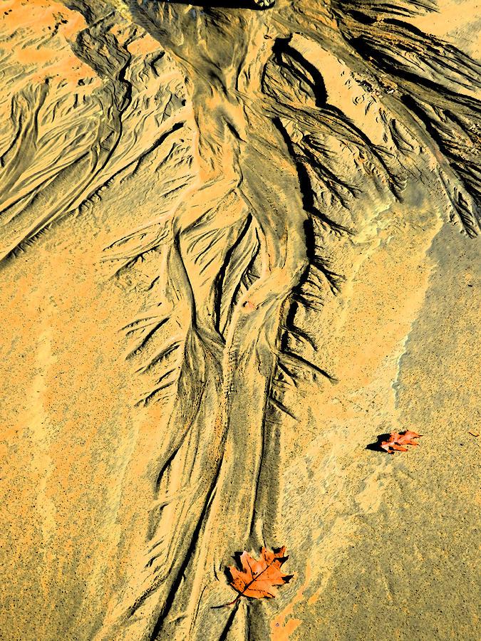 Marcia Lee Jones Photograph - The Art Of Beach Sand by Marcia Lee Jones